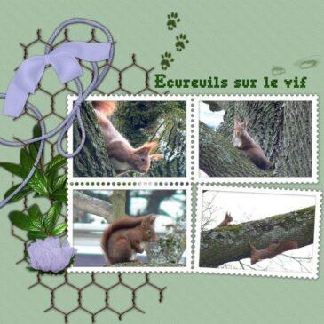 des petits écureuils sur le vif