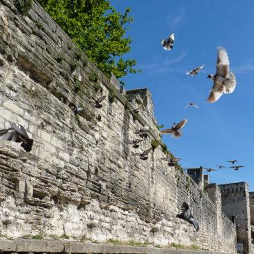 escapade à Avignon