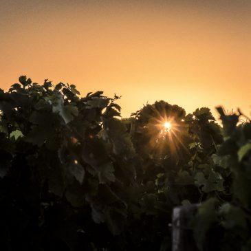 L'Estuaire de la Gironde : terre de vignes et de carrelets